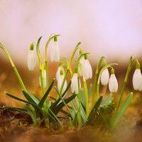 Моя весна :: Egīls Andrejevs