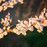Моя весна... :: Людмила Головня