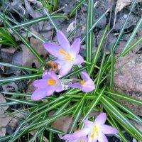Весна на Гвардейской улице :: Аlexandr Guru-Zhurzh
