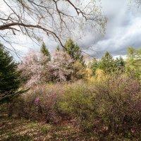 Весна :: Владимир Леликов