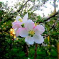 Цветы весны :: Катя Бокова