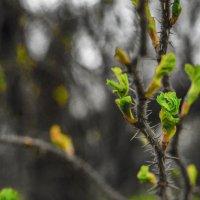 Весна приходит :: Александр Демьянцев
