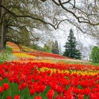 Весна в парке :: Viktor Schwindt