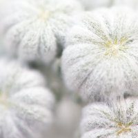 В ожидании цветения :: Дмитрий Горлов