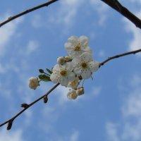 Цветы жизни :: LizaVal