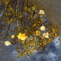 Осень... :: Татьяна Н.
