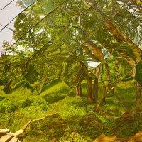 Кривые зеркала :: Седа Ковтун