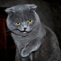 Легендарная улыбка Чеширского Кота :: Александр Бойко