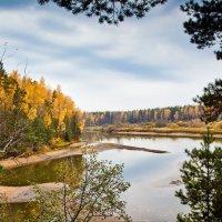 Заколдованный лес :: Вячеслав