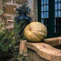 Осенний урожай :: Ирина