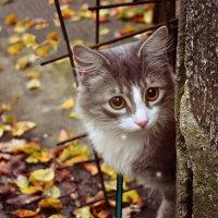 Милый и пугливый кот Филипп наслаждается осенью :: ...Настя ...