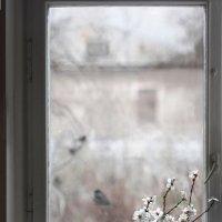 Февраль :: Ирина Гайворонская