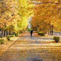 Золотая осень :: Алексей Сопельняк