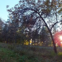 Закат солнца в парке :: Танзиля Завьялова