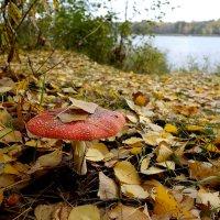 Осенний маячок. :: Валентина Гундарева