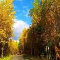 Золотая осень :: Мария