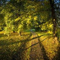 Осенним утром золото блистает! :: Игорь Герман