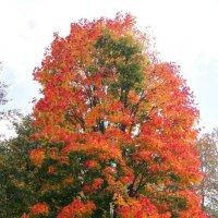 Осенние краски :: Екатерина Шиманская