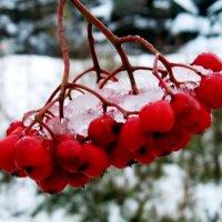 Осенний снег :: Анатолий