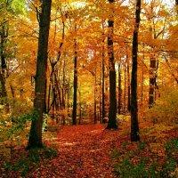 воодущевлённый лес :: олеся