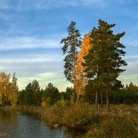 Средь берёз и сосен тихо бродит осень... :: Александр Тулупов