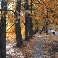 Золотая осень. :: Oleg4618 Шутченко
