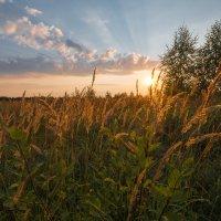 Просто осенний закат... :: Mario Brindizi
