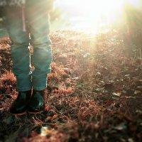 Осенние лучи :: Наталья Мицура