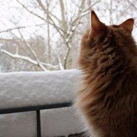 Доброе зимнее утро... :: Лариса Валентинова