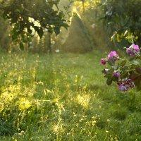 солнечное утро летом :: Nina sofronova
