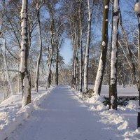 Мое замечательное утро в парке :: Сергей