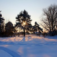 В рассветном солнце :: Катя Бокова