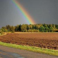 После дождя. :: Liudmila LLF
