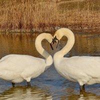 Это Любовь! :: Paparazzi
