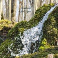 Прогулка в лесу :: Мария Кекало