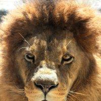 Зоопарк г. Вупперталь :: lora )))