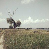 Проселочная дорога :: Анастасия