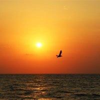 Закат над морем :: Любовь ***