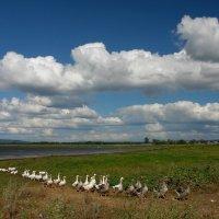 По дороге с облаками :: Vilyma ---