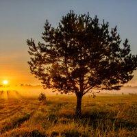 Солнце встаёт :: Дмитрий Брошко