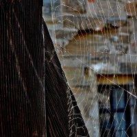 Чье то  паутиновое  счастье :: backareva.irina Бакарева