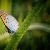 Бабочка :: Михаил Танин
