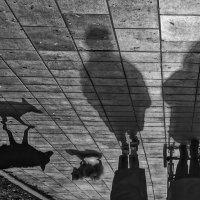 Люди  и собаки :: Алексей Виноградов