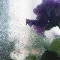 Свежесть холодного утра :: Юлия