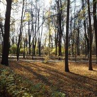 Осень в парке :: Cergey