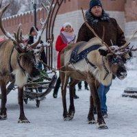 Северные олени в Туле :: Любовь Головина
