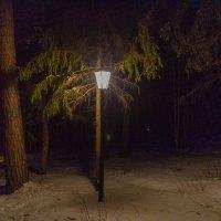Ночь, фонарь... :: Любовь Головина