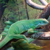 Изящная рептилия :: Любовь Клименок
