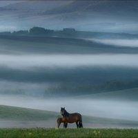 Ходят кони ... :: Влад Соколовский