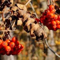 Осень на Южном Урале :: Зинаида Каширина